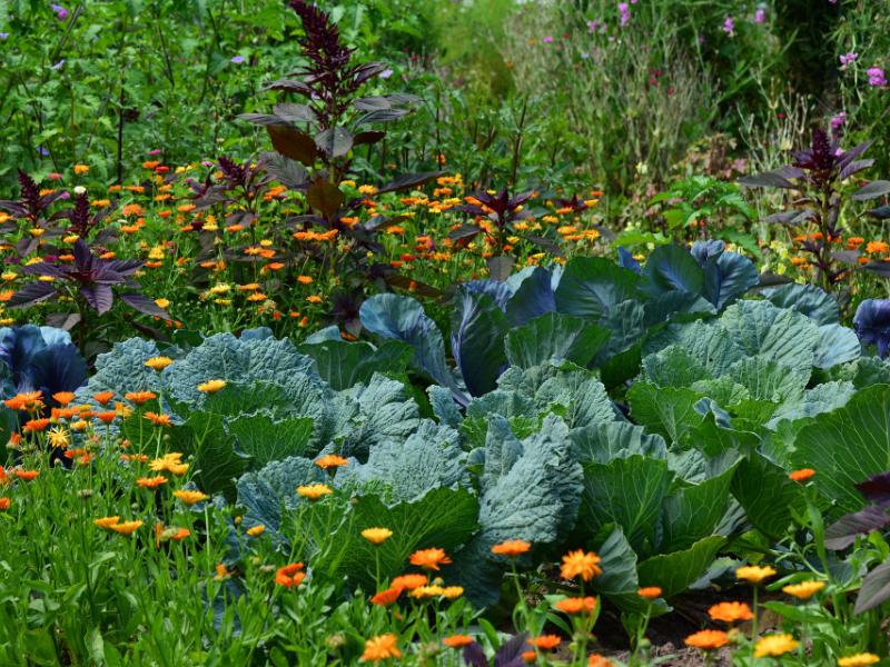 Comment faire un jardin pas cher
