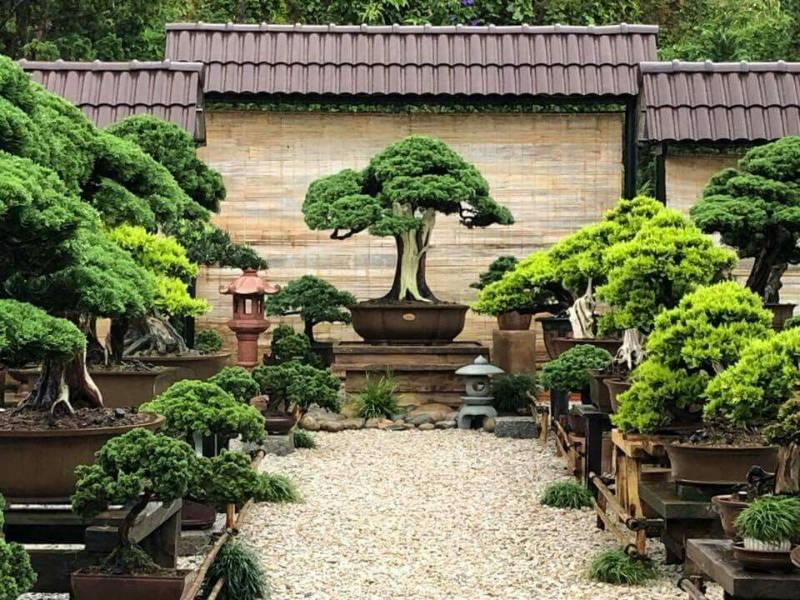 Créer un jardin bonsai pour profiter de sa collection